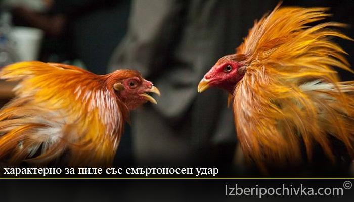 характерно за пиле със смъртоносен удар